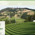 世界農業遺産 静岡の茶草場農法(しずおかのちゃぐさばのうほう)